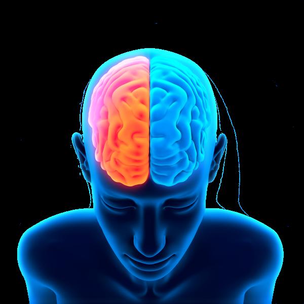 Brain-Free-PNG-Image